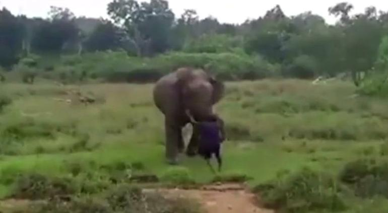 Un elefante furioso pisotea a un hombre en Sri Lanka — Fuertes imágenes