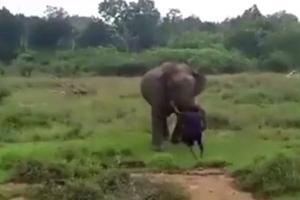Relacionada elefante-sri-lanka.jpg