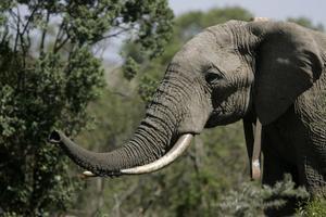 Relacionada elefante-bien.jpg