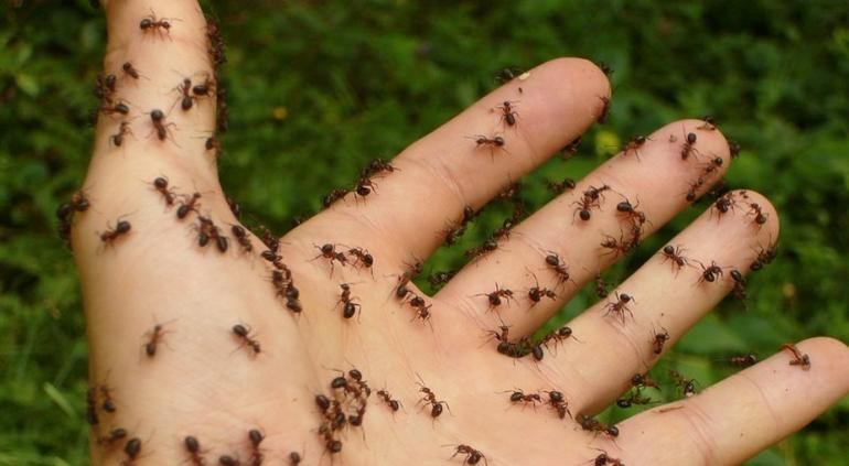 Hormigas evitaron que abusaran de jovencita de 16 años