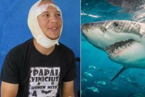 Relacionada tiburon.jpg