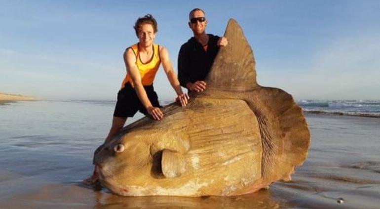 Extraño hallazgo: parecía una roca, pero era un monstruo marino