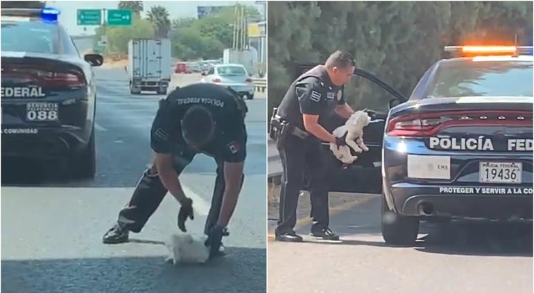 Policía salva a un perrito en Guanajuato y se hace viral