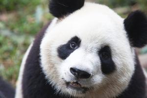 Relacionada panda-update.jpg
