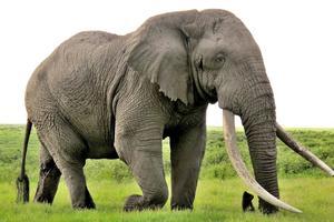 Relacionada elefante-tiempocom.jpg
