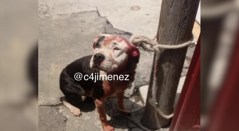Perro pitbull mata a bebé de un año en Iztapalapa