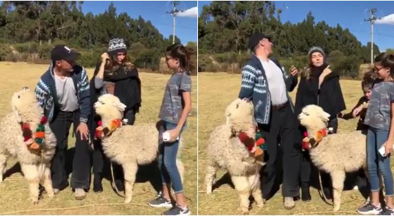 Alpaca le escupe a Sergio Mayer