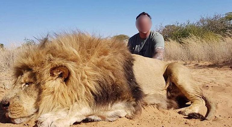 Pareja celebra la caza de león con un beso — Indignante