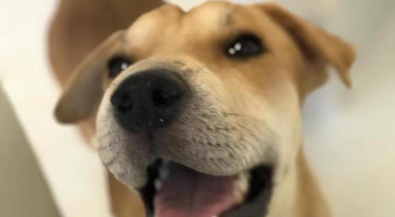 ¿Ya festejaste a tu mascota? Hoy es el Día Mundial del Perro