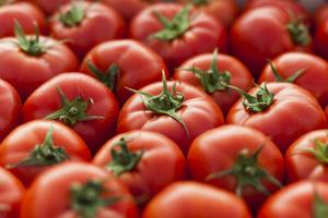 Relacionada tomatoe.jpg