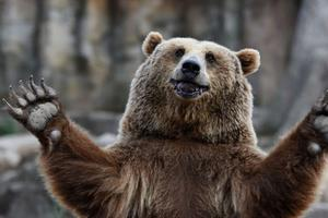 Relacionada oso.jpg