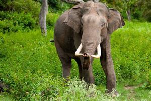 Relacionada elefantes.jpg