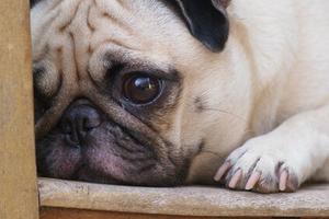 Relacionada perro.jpg