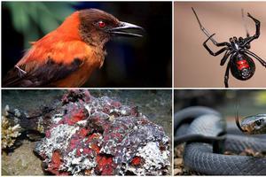 Relacionada animales-venenosos.jpg