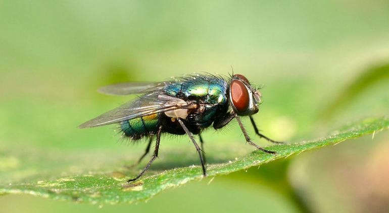 Durante una entrevista en vivo, un niño se comió dos moscas
