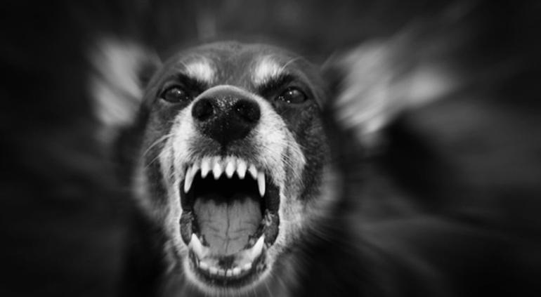 El desesperante ataque de un perro a una nena de 5 años