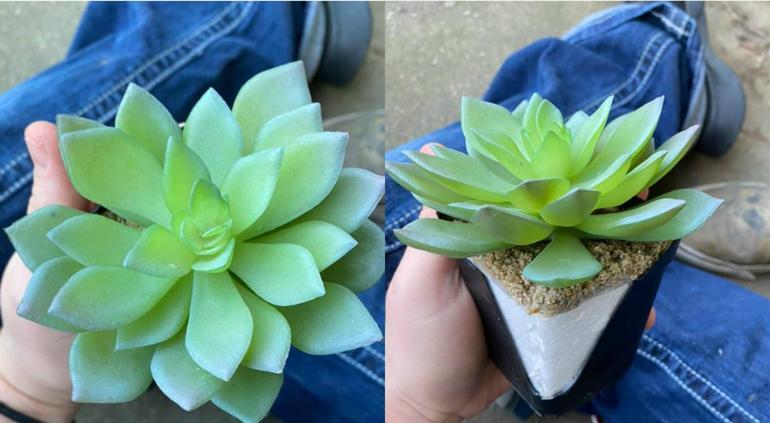 Creía que tenía una planta perfecta, pero se llevó una sorpresa