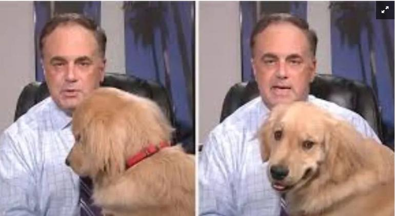 Perro interrumpe a meteorólogo que informaba desde su casa — Modo teletrabajo