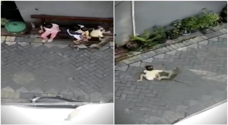 Un mono a bordo de una moto intentó secuestrar a un niño