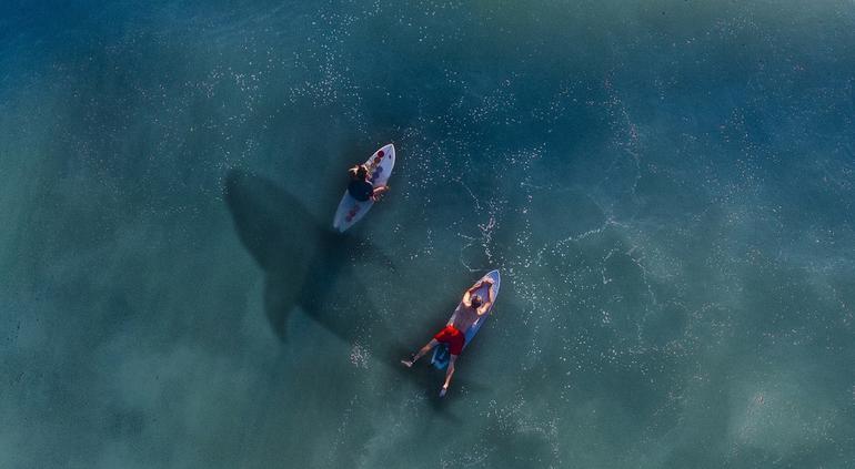 Un gran tiburón blanco acechó a un grupo de surfistas en Sudáfrica