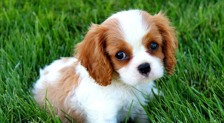 Un año humano no equivale a siete años de perro — Estudio
