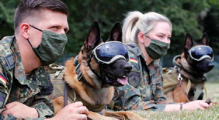 Un informe reveló que los perros pueden detectar el coronavirus