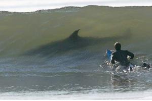 Relacionada surfista.jpg