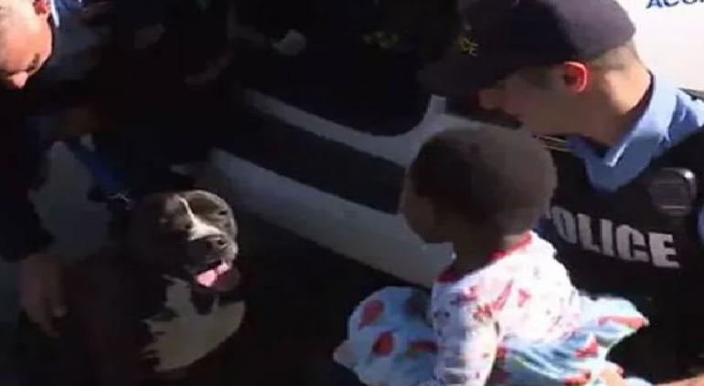 Perrito callejero cuida a niño extraviado hasta encontrar a su papá