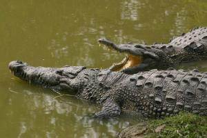 Relacionada laguna-censo-cocodrilos.jpg