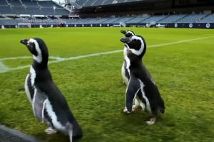 Relacionada pinguinos.jpg