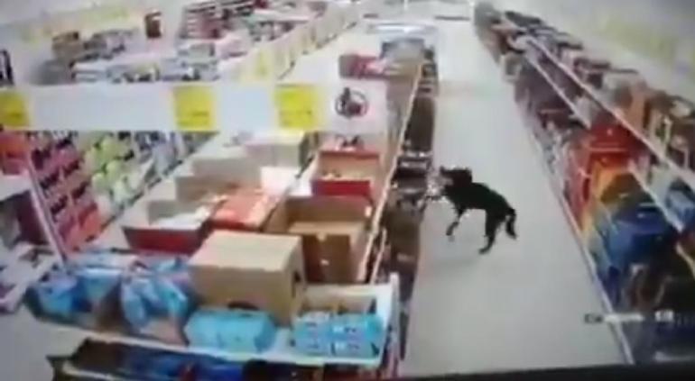 Perrito sanitiza sus patas tras robar comida en tienda