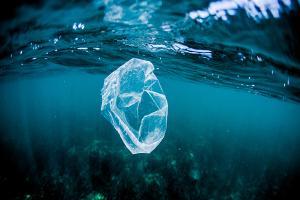 Relacionada plastico-punto-mas-profundo-del-oceano.jpg
