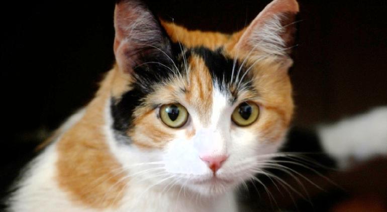 Fiesta de cumpleaños de un gato deja a 15 personas con Covid