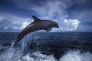Relacionada delfines.jpg
