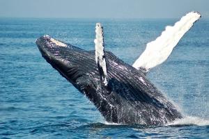 Relacionada ballena.jpg