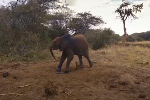 Relacionada bebe-elefante.jpg